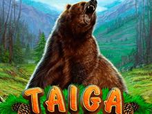 игровой автомат Taiga / Тайга